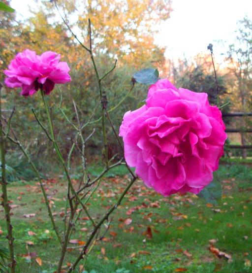 camera-cleanup-november-9th-2008-048-resized