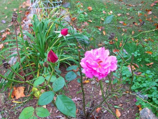 camera-cleanup-november-9th-2008-049-resized