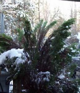 march-3-shrubbery