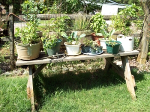 Garden-early-June-001